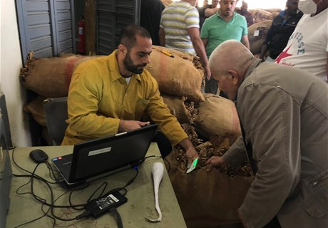 Regie starts purchasing tobacco harvest from North and South Lebanon
